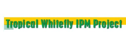 tropicalwhitefly
